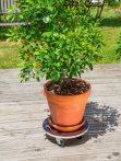 FLORA ROLL STRONG gurulós növényalátét