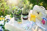 Kertészkedés nagyoknak és kicsiknek